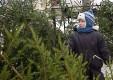 Где в Калуге купить новогоднюю ёлку
