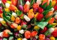 19 точек продажи цветов откроются к 8 марта