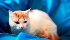 Выставка-раздача кошек и собак пройдет в Калуге