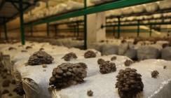 В Калуге может появиться грибоводческий кластер
