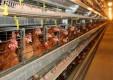 ВТБ развивает сотрудничество с птицефабрикой «Роскар»