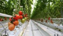 ВТБ профинансировал расширение тепличного комплекса в Волгоградской области