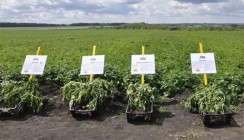 ВТБ Пенсионный фонд заключил договор с агрокомпанией «Сингента»